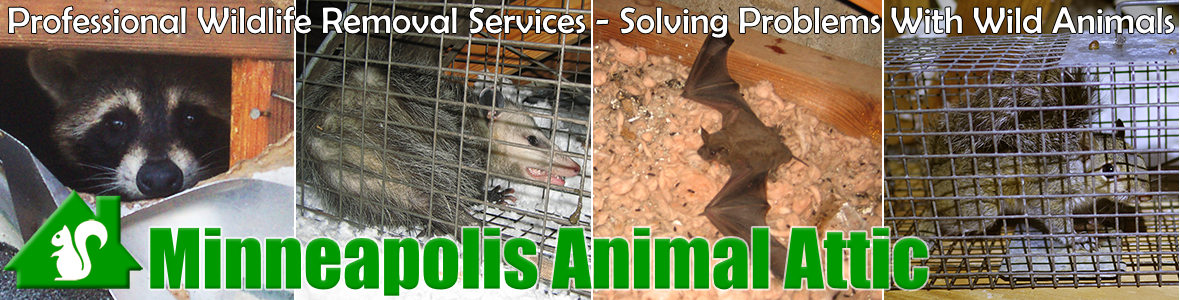 Eden Prairie Animal Attic